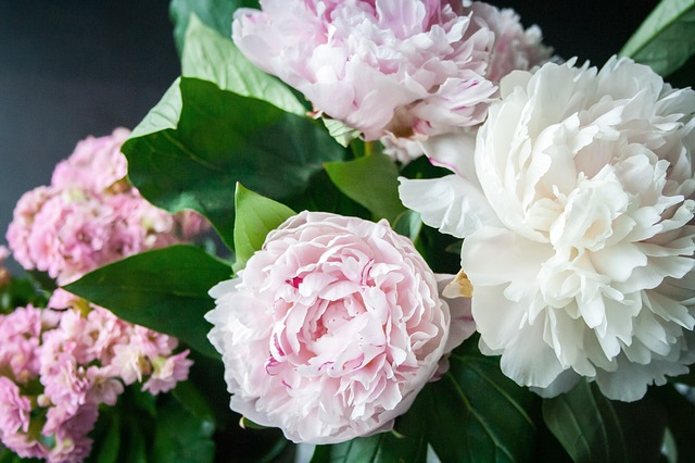 この画像には alt 属性が指定されておらず、ファイル名は flower-823655_640.jpg です